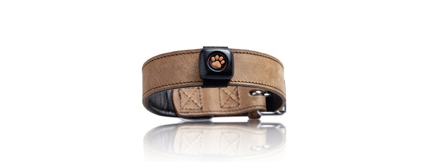 Bluetooth Low Energy wearable dog activity tracker monitors pet exercise data to keep dogs fit and healthy