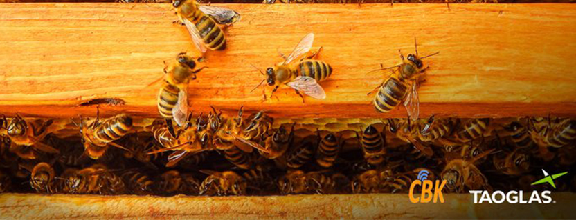 Taoglas connects bees and data to ensure optimum apiary health